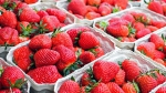 Plant fruit sweet food red produce market strawberry fruits strawberries frutti di bosco 1039864 - Газета Новые Известия